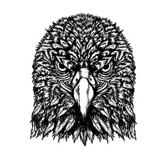 Eagle vector drawing on white background.Eagle tattoo art highly detailed in line art style.