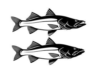 Common snook fish