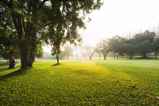 Scenery green garden and meadow in morning with coconut tree palm, Wonderful sunbeam at the natural park