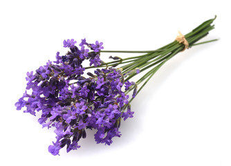 Tuinposter Lavendel Lavendel, Lavendula, angustifolia, Heilpflanze