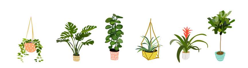 potted plants collection. succulents and house plants. hand drawn vector art.  Set of house indoor plant vector cartoon doodle. Fototapete