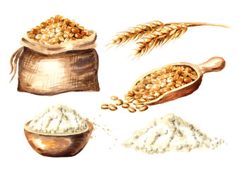 Flou, grain and whreat set. Watercolor hand drawn illustration, isolated on white background