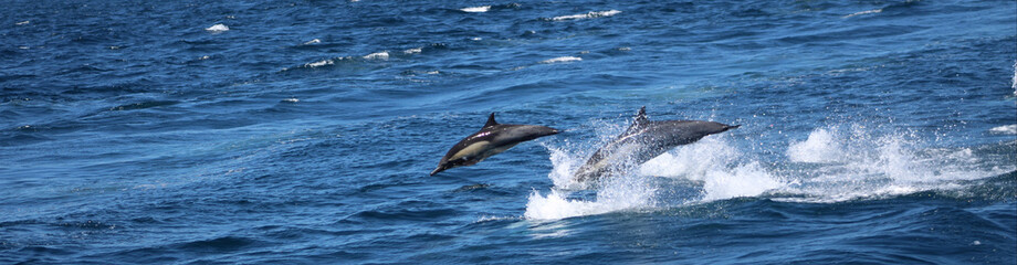 Pacific Ocean: Channel Islands wildlife and seaside cliffs