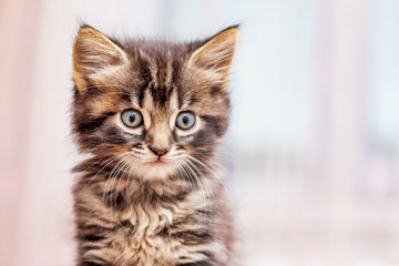 Little striped kitty with a distinct look on a blurry background_