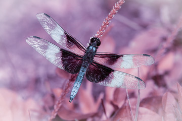 Sevierville Dragonfly