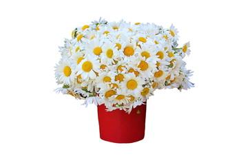 large field chamomile flower bouquet