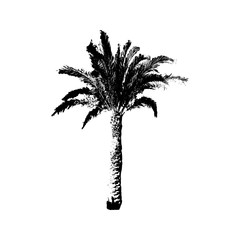 Hand drawn Palm Tree isolated on white background. Tropical Design element for t-shirt prints, textile.