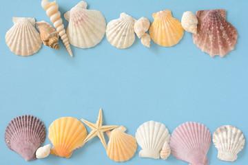 貝殻 ひとで 水色背景