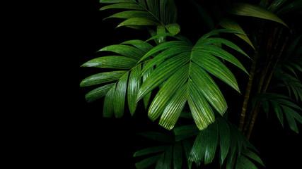 Tropical palm leaves, rainforest foliage plant trees on black background.