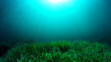 Underwater sea grass and blue ocean