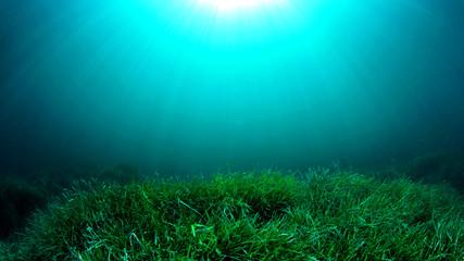 Underwater sea grass and blue ocean