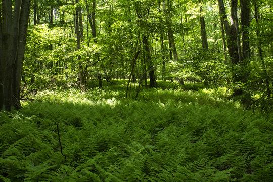 Appalachian Trail Pennsylvania Forest Scene