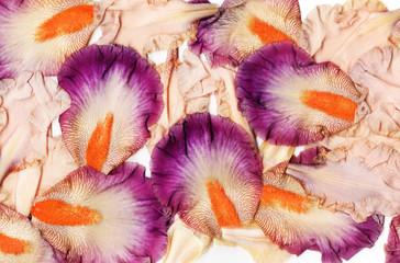 iris petals background