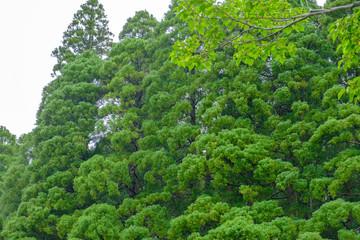 ふるさとの緑豊かな里山3