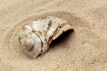 the sea shell lies on the sand