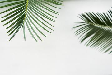 leaves on white background. Summer banner