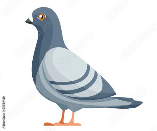 Pigeon bird  Flat cartoon character design  Colorful bird