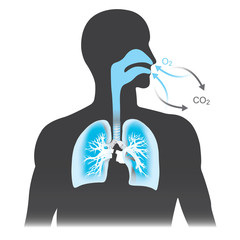The lungs are the primary organs of respiration in humans. Mono tone black and blue colour.