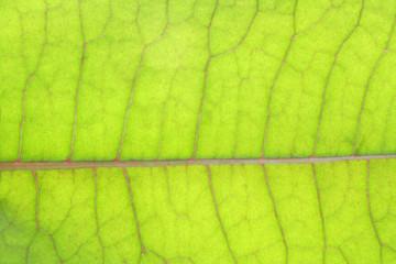 Serface green leaves