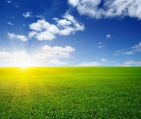 Fototapete - Green meadow under sun