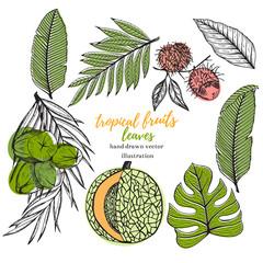 Vector tropical set with tropical leaf, banana, coconut,mango, melon, lychee. Hand drawn tropical vector illustration.Tropical fruits.Stock vector.