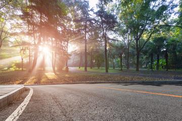 .Morning forest park