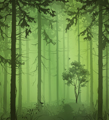 Fototapete - green Forest