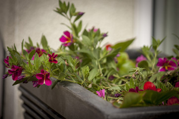 Window box filled with plants