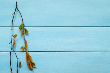 Blue wood texture background with dry branch.