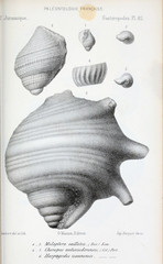 Illustration of fossils