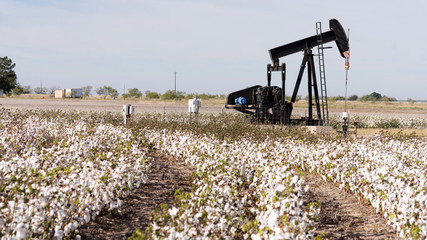 Land Creates Textiles and Energy for Cultivation