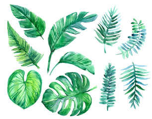 Set of tropical leaves. Watercolor illustration