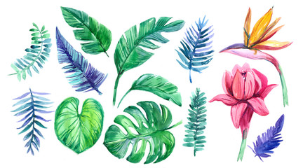 Set of tropical leaves and flowers. Watercolor illustration