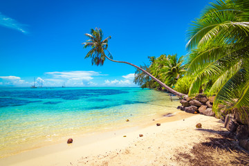 Tropical ocean beach, coconut palm trees and transparent turquoise water