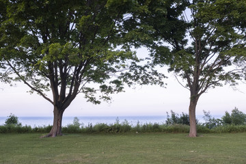Two Green Trees Overlooking The Water At Lake Michigan