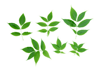 Collection of green plant leaves isolated on white background.