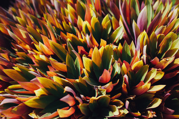 colorful leaves plant background, closeup view