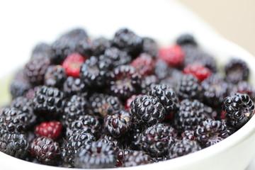 Bowl of fresh blackberries from the garden
