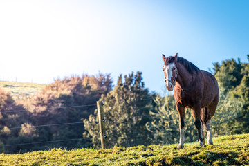 A horse standing in a green filed