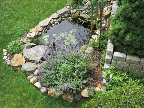 A man made Koi fish pond with lily pads and other plants
