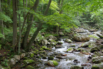 River Water Flowing Through Moss Covered Rocks in Jefferson National Forest in Giles, Virginia in Summer