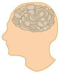 Brain in head