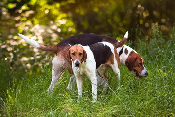 two hounds in the forest