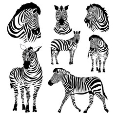 Logo with the head of a zebra. Flat zebra portrait for card, placard, invitation, book, poster, note book, sketch book.