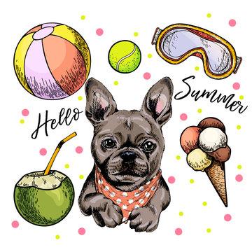 Vector portrait of French bulldog dog. Hello summer cartoon illustration. Coconut cocktail, balls, ice cream. Hand drawn pet portait. Poster, t-shirt print, holiday celebration, postcard, summertime.