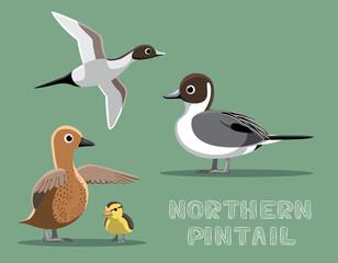 Northern Pintail Duck Cartoon Vector Illustration