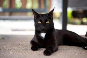 Schwarze Katze mit gefährlichem Blick