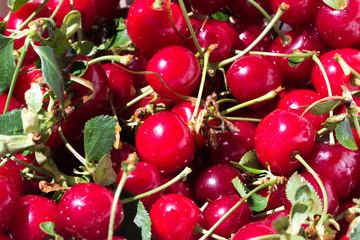 Fresh cherries with stems