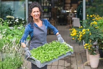 Fleißige Gärtnerin trägt lächelnd eine Kiste mit Petersilienpflanzen
