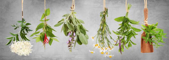 Frische Pflanzen für Tee